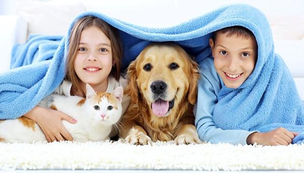 Переноски, клиперы для собак